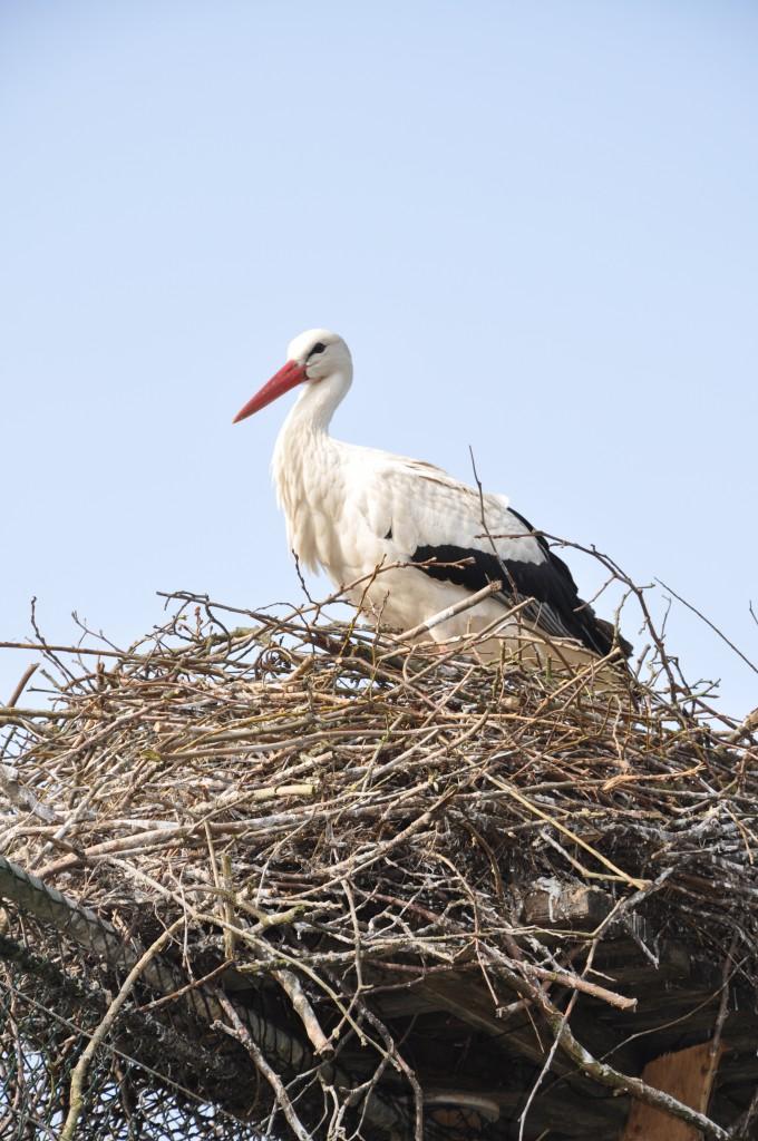 Storch im Westkuestenpark